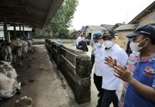 Gus Halim Kunjungi Peternakan di Lampung. Foto : Kementerian Desa PDTT RI