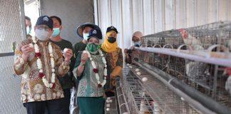 Menteri Desa PDTT RI, Abdul Halim Iskandar saat kunjungan kerja ke BUMDes Mbangun Deso, Desa Kajar, Kabupaten Rembang, Jawa Tengah, Indonesia. Foto : Kemendesa PDTT RI