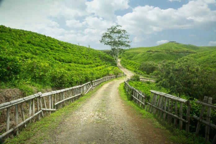 Perkebunan Teh Malino Highlands Makassar, Kecamatan TInggimoncong, Gowa, Sulawesi Selatan, Indonesia. Foto : Kemenparekraf RI